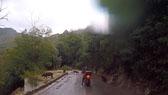 Corsica Pigs - Video