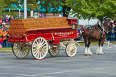 The Budweiser Clydesdales - 2013